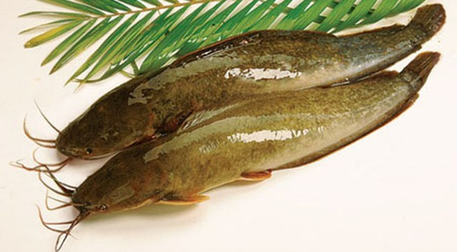 3 bước đơn giản có ngay món cá trê nấu canh chua thơm ngon nóng hổi 11